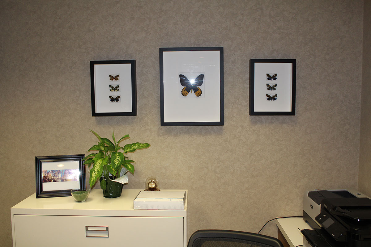 Butterfly Pictures - Office Tour - Arlington Dental Arts